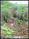 San Pelaio mina. Sarrera erorita-1